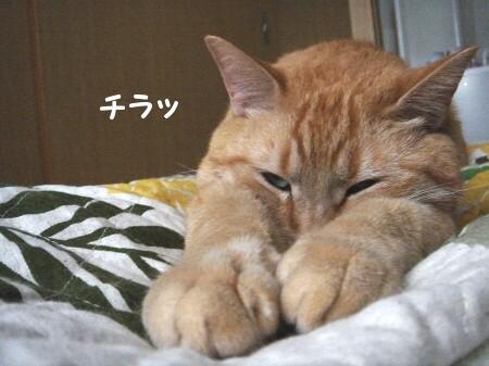 猫がそれして何が悪い? (4)