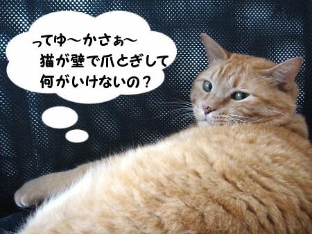 猫がそれして何が悪い? (5)