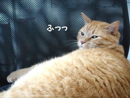 猫がそれして何が悪い?