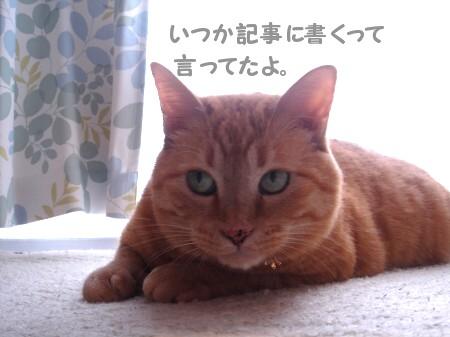 おつかれちゃん♪ (3)