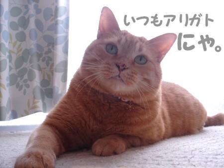 おつかれちゃん♪ (4)