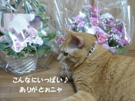 ぉ花がぃぃぃっぱぃ♪ (4)