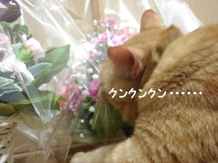 ぉ花がぃぃぃっぱぃ♪ (5)