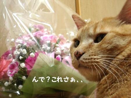 ぉ花がぃぃぃっぱぃ♪ (6)