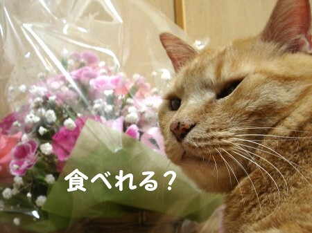 ぉ花がぃぃぃっぱぃ♪
