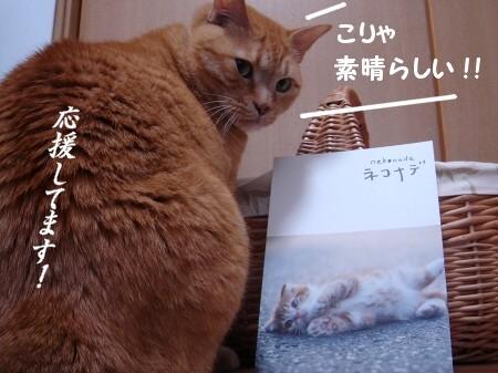 猫って♪映画って♪ほんとぉぉぉ~にいいもにょですね! (2)