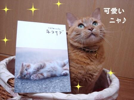 猫って♪映画って♪ほんとぉぉぉ~にいいもにょですね!