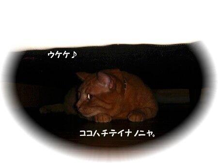 地底ニャーン (1)
