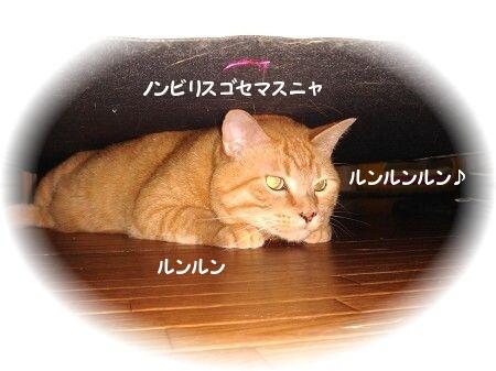 地底ニャーン (4)