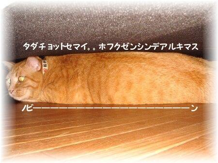 地底ニャーン (5)