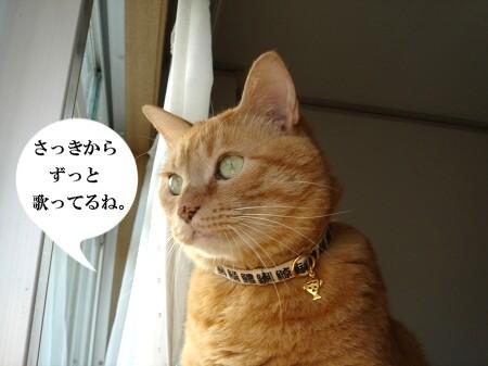 鼠先輩の歌が・・・ぽっぽ♪ (1)