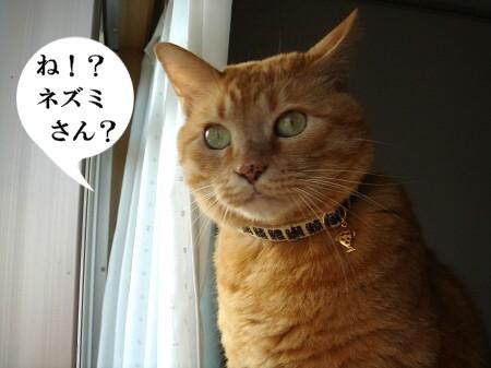 鼠先輩の歌が・・・ぽっぽ♪ (2)