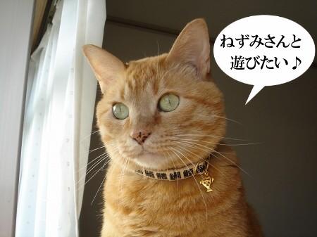 鼠先輩の歌が・・・ぽっぽ♪ (3)