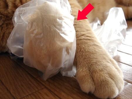 ビニール手袋? (3)