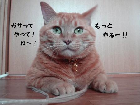雑誌を買うと付いてくるアレですよ! (3)