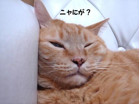 発見!幸福の腹毛!!? (1)