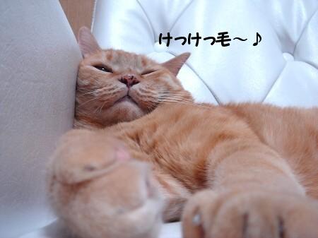 発見!幸福の腹毛!!? (2)