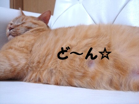 発見!幸福の腹毛!!? (3)