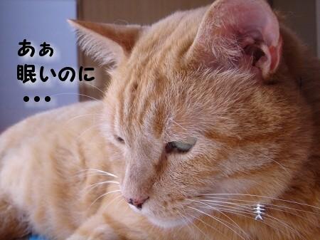 睡眠を邪魔する者 (2)