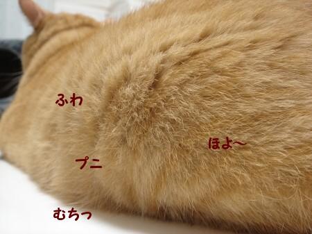 ぞ~うさん♪ぞ~さん♪ (3)