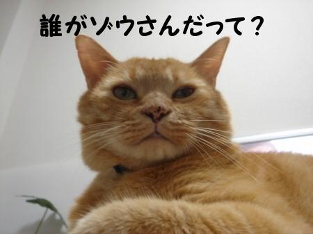 ぞ~うさん♪ぞ~さん♪ (4)