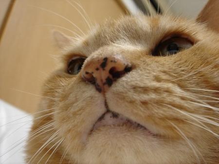 ブログの顔 (2)