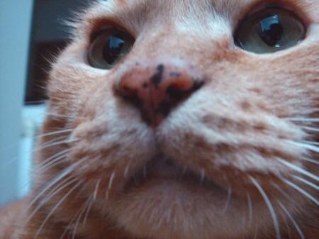 ブログの顔 (5)