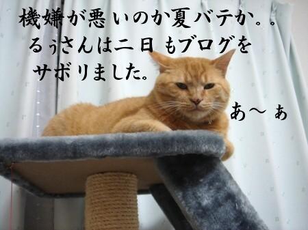 不機嫌なお顔とお宝 (1)