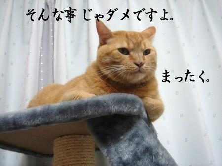 不機嫌なお顔とお宝 (2)