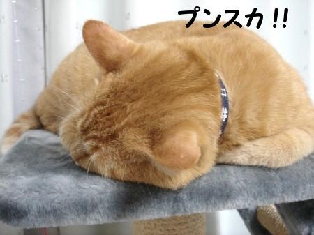 不機嫌なお顔とお宝 (3)