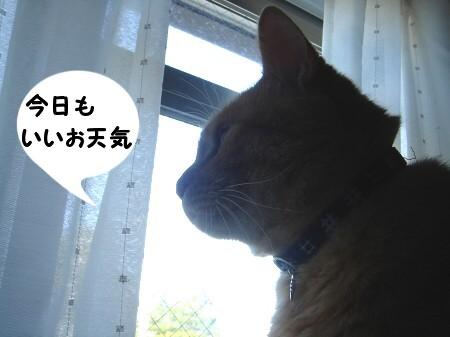 今日も暑くなるね (1)