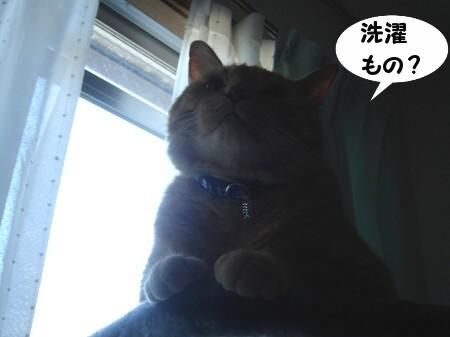 今日も暑くなるね (2)