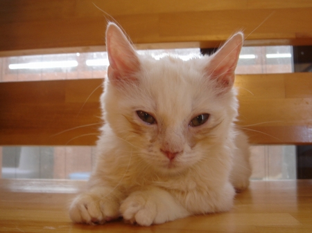 初めての猫カフェ (1)