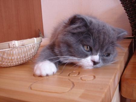 初めての猫カフェ (2)