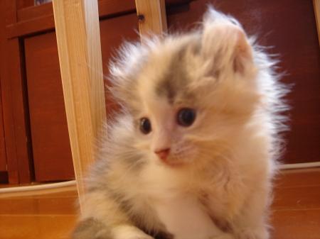 初めての猫カフェ (3)