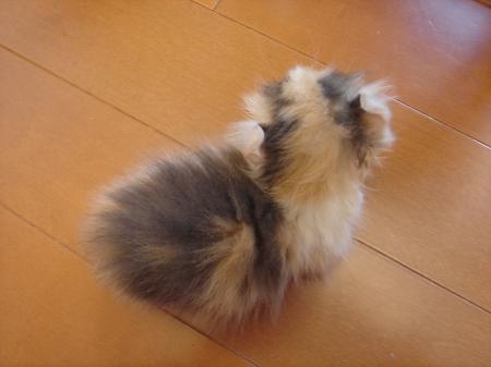 初めての猫カフェ (4)