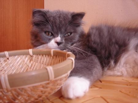 初めての猫カフェ (5)