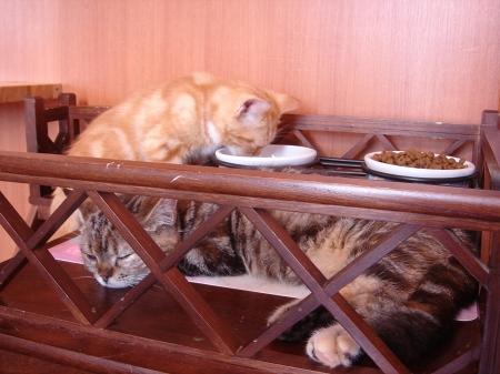 初めての猫カフェ (6)