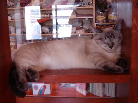 初めての猫カフェ (8)