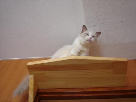 初めての猫カフェ (9)