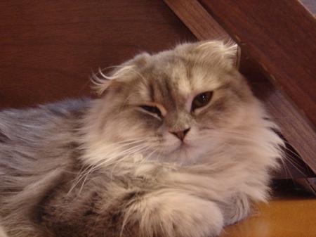 初めての猫カフェ (10)