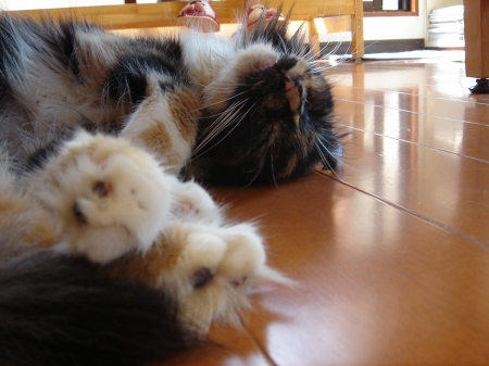 初めての猫カフェ (11)