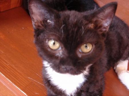 初めての猫カフェ (12)