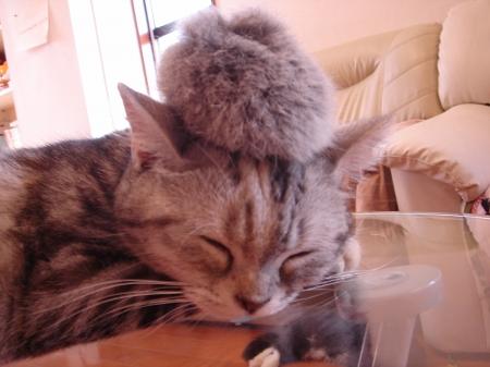 初めての猫カフェ (13)
