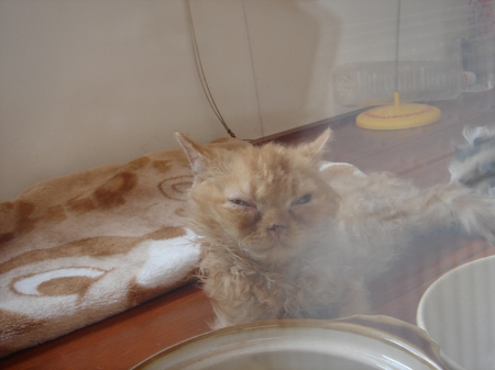 初めての猫カフェ (19)