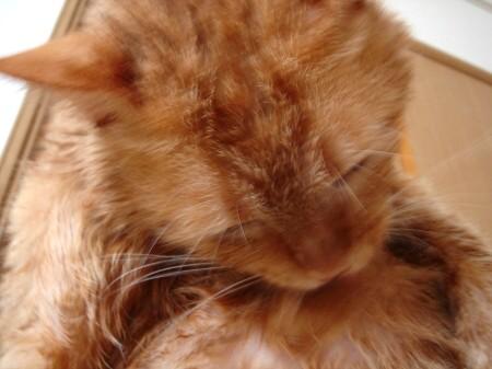 毛皮を洗濯した猫 (6)