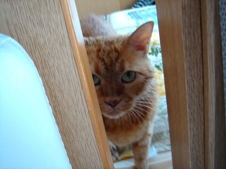 毛皮を洗濯した猫 (8)