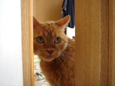 毛皮を洗濯した猫 (9)