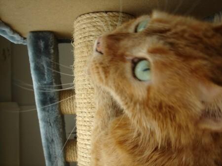 毛皮を洗濯した猫 (10)