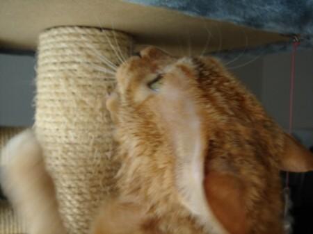 毛皮を洗濯した猫 (11)